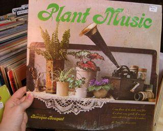 MysterySpotPlantMusic